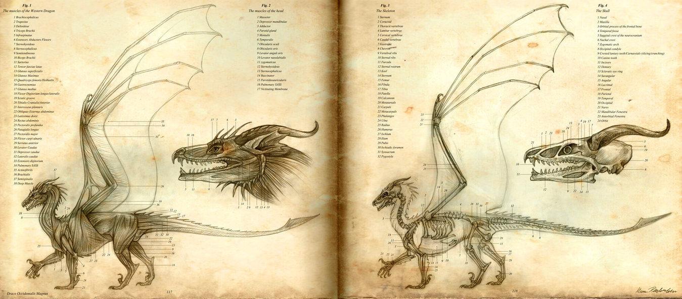 P Physiology Princess Of Dragons